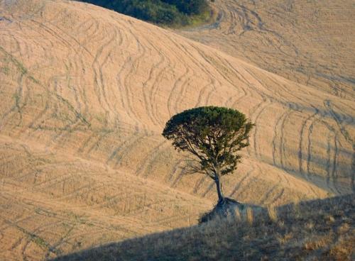 arbre toscan.jpg