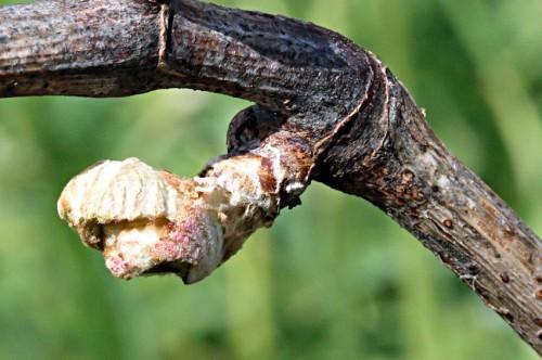 bourgeo-vigne.jpg