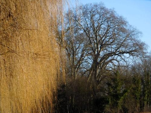 arbre en poche.jpg