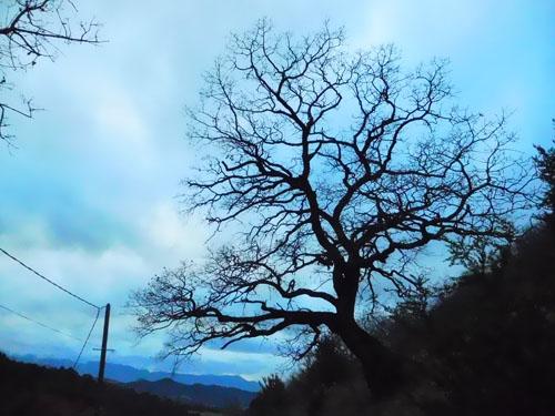nudité arbre.jpg